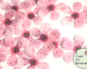"""48 wafer paper cherry blossom flowers, 1"""" across. Edible flowers for wedding cakes, cupcake toppers, and cake pops. Cake decorating ideas"""