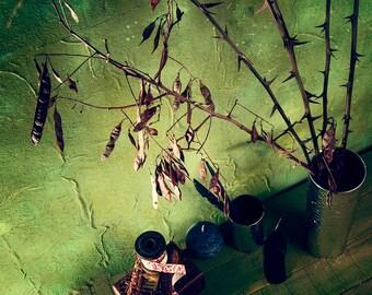 Natural  acacia twigs rustic decor, dried flower arrangement, thorntree rustic home decor, dried acacia sticks farmhouse decor, magic decor