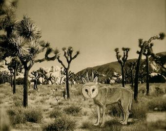 Joshua Tree - Odd Owl Creature - As seen in Joshua Tree, Calif - Signed 8'x8' archival print, Sepia tone
