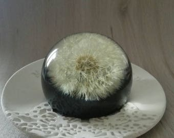 Housewarming gift Paperweight Dandelion decor paper weight flower sphere Unique gift Real dandelion Make a wish Desk gift for Father Bride