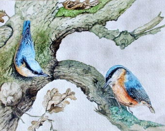 Painting in watercolor 'Nuthatches' 30 x 40 cm