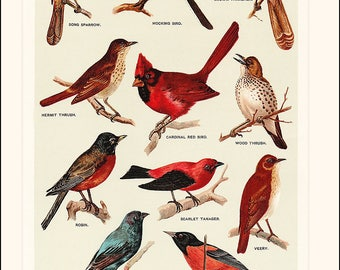 SONG BIRDS Poster ~ Wildlife lithograph print ~ Vintage wild birds ~ Robin, Oriole, Mocking Bird, Blue Bird, Cardinal, Farmhouse Bird Print