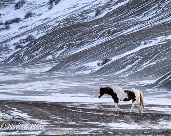 A Cold Winter's Day in Sand Wash Basin - Fine Art Wild Horse Photography Print, blowing winter wind, wild mustang, wild horse photo