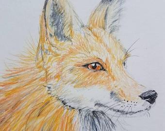 Cute fox sketch