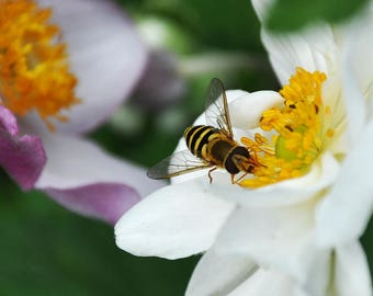 Lunch Time - Insect Photography, Flora.