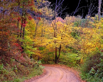 Autumn around the Bend 5x7 Fine Art Color Fall Photo - a Road Less Taken - Tree Print - Yellow Leaves