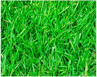 Green grass photo, nature photography, green nature wall art, grass print, green wall Decor, fine art print, home Decor print, lawn print
