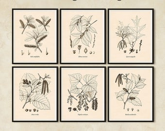 Botanical print set, Set of 6 prints, Botanical print vintage, Antique botanical prints, Tree print, Printable set, Botanical digital JPG
