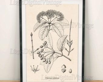 Tree wall art, Viburnum, Wall art download, Tree wall décor, Botanical print vintage, Antique botanical, Digital print, Tree poster, PNG JPG