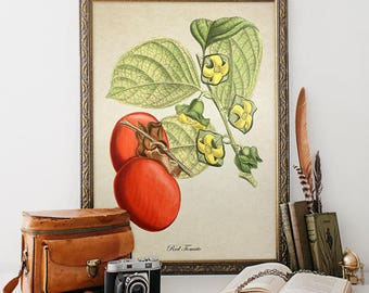 Vintage Botanical Wall Art Print Tomato Giclee Kitchen Decor Antique Natural History Vegetable Art Decorative Tomato Reproduction VF024