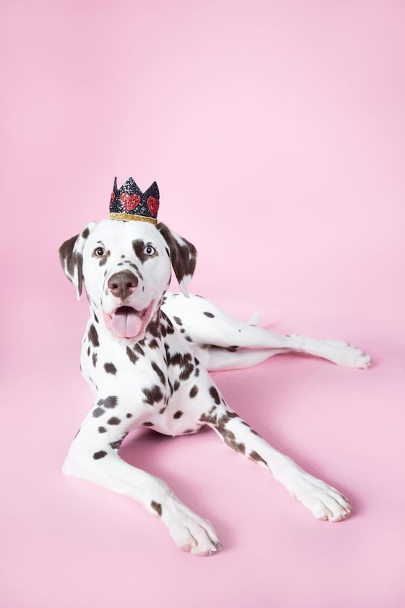 Dog Costume || King of Hearts Crown || Dog Hat || Crown Headband || Dog Clothes || Add Any Number