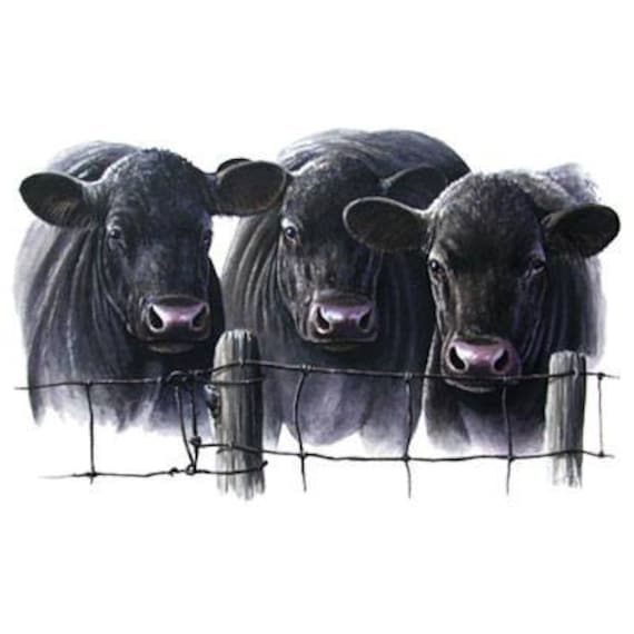 Cattle Three Black Angus Cows On One 16 Inch Square Fabric