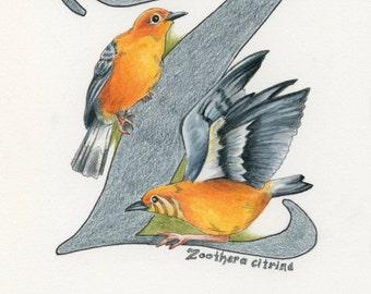Avian Alphabet Z