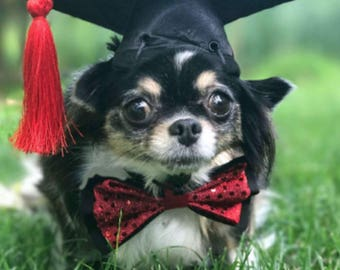 Graduation Cap for dogs and cats (with gold,red,green,blue, burgundy, orange, or purple tassel)