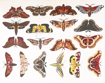 Colorful Moths #1 - Glass Fusing Decal, Ceramic Decal, Enamel Decal