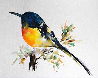 Original Watercolor Painting Colorful Blue Yellow Sunbird on A Branch 6x8 inch
