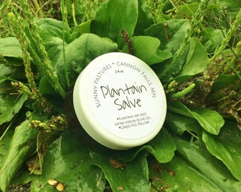 Plantain Salve - bug bites, bee stings, minor cuts & burns