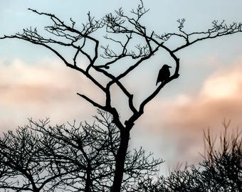 Silhouette of crow in a tree