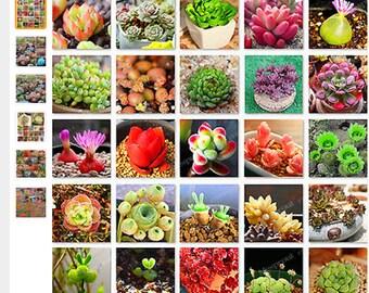 200pcs/lot Mix Lithops Seeds Mix Varieties Succulents Seeds Succulents Bonsai Home Garden Ornament Potted home & garden