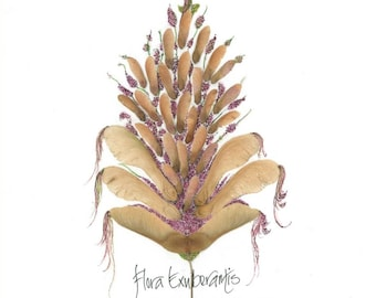 """Flora exuberantis--botanical style print with calligraphy and """"helicopter"""" seeds from maple tree"""
