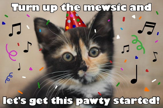 Funny Meme Puns : Funny animal birthday puns animal best of the funny meme