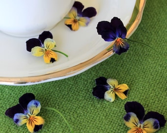 Dry Violas, Dry Flowers, Real, Wedding Favor, Decoration, Table Decoration, Centerpiece, Flower Girl, Viola, Craft Supply, Dry Violas