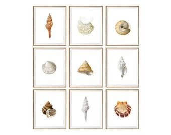 Seashell Art Print SET of 9. white interior art, contemporary prints, seaside prints, seaside art, beach cottage art, seashell decor, 8x10