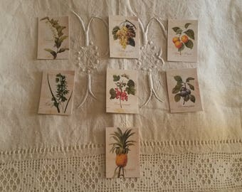 Set of 7 stickers for scrapbooking / plants and fruits botanist / embellishments / stickers