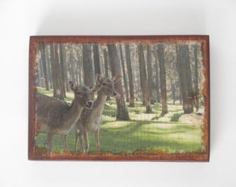 Deer picture, deer decor, deer wall art, photo transfer on wood, wall art, photo plaque, picture on wood, nature decor, deer nursery decor
