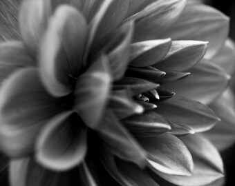 Black and White Flower Close Up, Center Focus, Beautiful Flower Petals, Digital Download, Nature Photograph, Woodland Photo