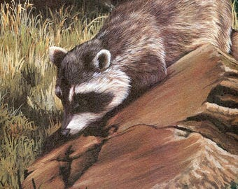 """Racoon """"Buy one, choose another free""""  wildlife, animal prints, bird prints, wildlife prints, animals, birds"""