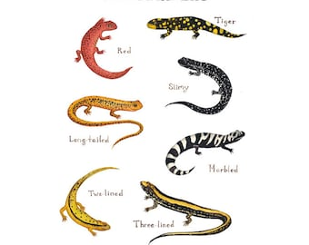 Salamanders Field Guide Art Print  / Watercolor Painting / Wall Art / Nature Print / Wildlife Art