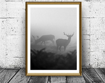 Deers in Mist Print, Animals Photo, Forest Poster, Nature With Animals Print, Woodsman, Mystic Photo, Deers Horn, Animals In Nature