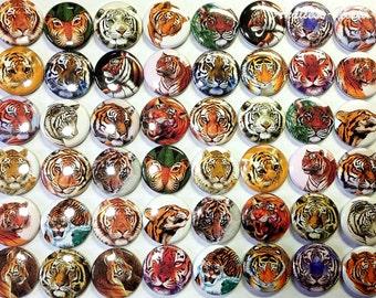 "Tiger Magnet, 1"", 1.5"", Button Magnet, White Tiger, Tiger Button, Tiger Gift, Tiger Party Favor, Tiger Birthday, Tiger Decor, Locker Magnet"