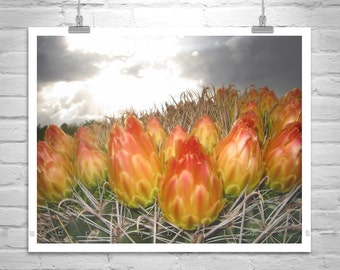 Desert Flower Photograph, Cactus Art, Cactus Flower Picture, Arizona Gift, Arizona Flower Art, Barrel Cactus Flower, Cactus Blossoms