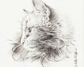 Pencil drawing on paper cat gray 20 X 20 cm