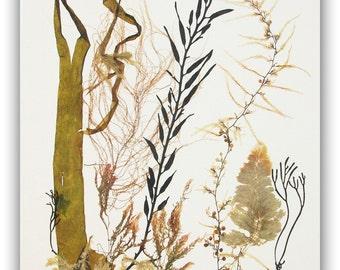 Seaweed art, Pressed seaweeds, Original sea weed collage, brown algae pressing, coastal living, beach cottage decor, victorian algae art