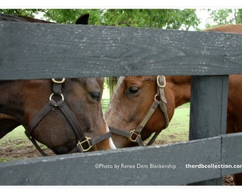 Horse Play Photography
