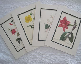 Set of 4 Botanical Prints Redoute Grenadille a Grappes Papaver Cyclmen Amaryllis Reds Greens Yellow Pink Matted