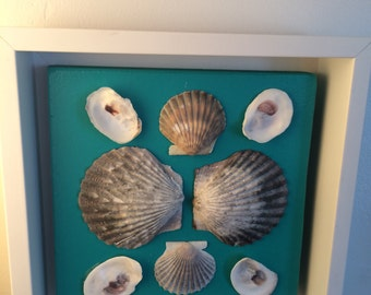 Shell Shadow Box Framed Shells Bay Scallop Oyster Shells Mounted on Aquamarine Mat Board in White Floating Frame with Cape Cod Shells