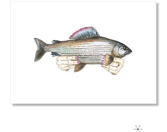 Limited Edition Prints: Greyling Watercolor Illustration (Holding Native Fish - Series)