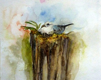 the Seagull in the socket nest watercolor