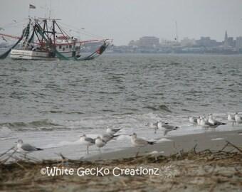 Shrimp and Seagulls, Beach, Sullivans  Island SC, Charleston Harbor