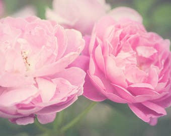 Flower Photography - Flower Art - Floral Art Print - Pastel - Summer Decor - Rose Photograph - Pink - Shabby Chic Decor - Dreamy Photography