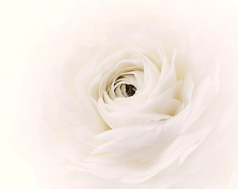 White Flower Wall Art, Flower Print, Ranunculus Photography, White Bedroom Decor
