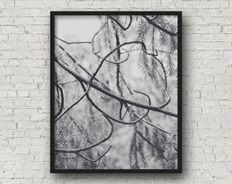 Curled tree branches, black and white fine art photography print, nature photography print, art print, wall art, woodland decor (tree 01 bw)