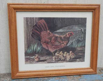 Cute Vintage Hen and Baby Chicks Framed Print!