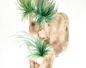 Original 8 x 10 inch watercolor painting of a tillandsia air plant by Meredith O'Neal