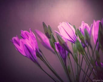 """Flower Photography - purple flowers, spring, purple and pink, flower wall prints, flower wall art, home decor, purple decor - """"Society"""""""