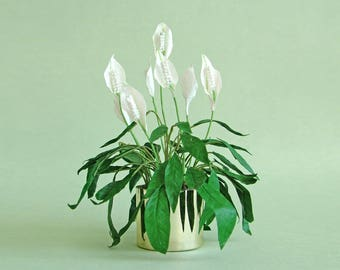 Dolls' house Peace Lily, miniature houseplant in 12th scale
